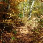 woods-800